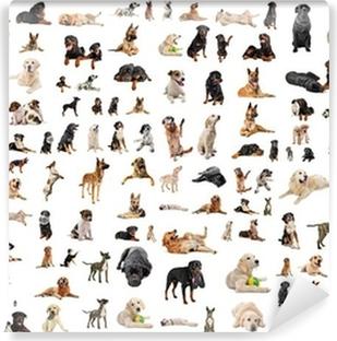 Afwasbaar Fotobehang Groep van rashonden