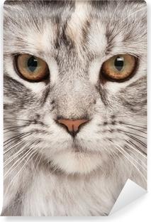 Afwasbaar Fotobehang Maine-coon close-up portret