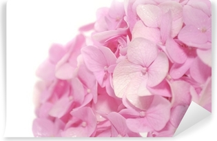 Afwasbaar Fotobehang Mooie Roze Hydrangea bloemen op witte achtergrond