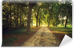 Afwasbaar Fotobehang Park