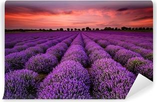 Afwasbaar Fotobehang Prachtig landschap met een lavendelveld tijdens zonsondergang