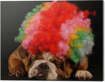 Plakat Bulldog ler på en annen hund kledd med klovn perle • Pixers® - Vi  lever for forandring e865a9bb4fde9