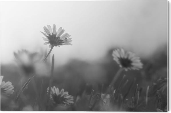 Akrylbilde Løvetann. - Planter og Blomster