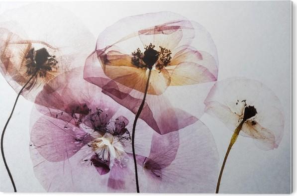 Akrylbilde Tørrvalmuer - Planter og Blomster