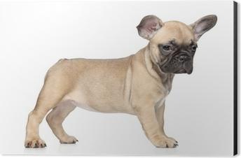 Ranskanbulldoggi Pentu Valkoisella Pohjalla Pixerstick Tarra Pixers Elamme Muutoksille