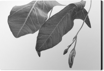 Black and white macrophoto of plant object with depth of field Aluminium Print (Dibond)