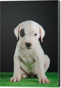 Dogo Argentino Puppy Wall Mural Pixers We Live To Change