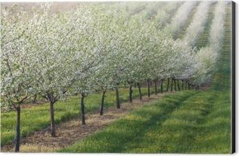Flowering orchard Aluminium Print (Dibond)