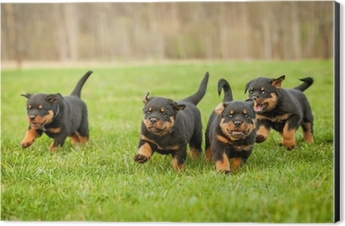 Four Rottweiler Puppies Running Pillow Sham Pixers We Live To