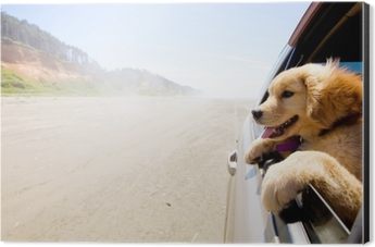 Puppy looking out the window of a car Aluminium Print (Dibond)