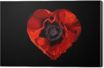 Red poppy flower on a black background bath mat pixers we live red poppy flower on a black background bath mat pixers we live to change mightylinksfo