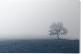 solitary tree with fog Aluminium Print (Dibond)