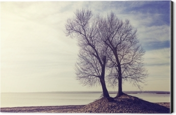 Twin trees on a river bank at sunset, color toned picture. Aluminium Print (Dibond)