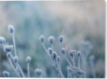 Aluminium Print Abstracte natuurlijke achtergrond van bevroren planten bedekt met rijp of rijp