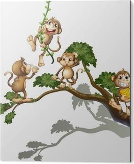 Aluminium Print Een boom met vier apen