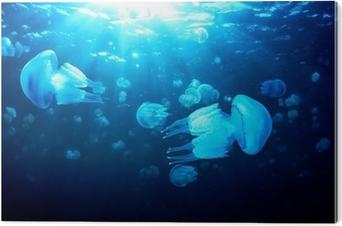 Aluminium Print Kwallen drijvend in diep blauw water, de Zwarte Zee