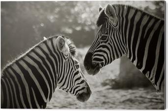 Aluminium Print Portret van tot zebra's, sepia blik