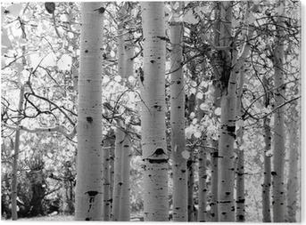 Aluminium Print Zwart-wit beeld van ratelpopulier bomen