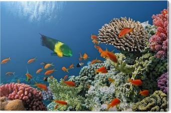 Alüminyum Baskı (Dibond) Kızıldeniz'de mercan kayalığı Tropikal Balık