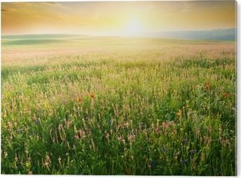 Alüminyum Baskı (Dibond) Mor çiçek bahar çayır.