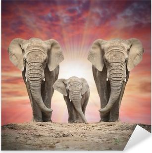 Pixerstick Aufkleber Afrikanische Elefantenfamilie auf der Straße.