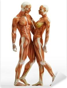 Pixerstick Aufkleber Anatomie paar