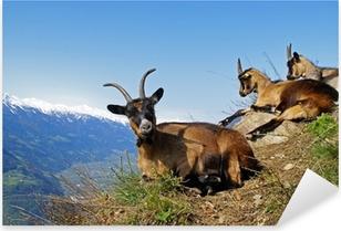 Pixerstick Aufkleber Bergziege / Südtirol 1