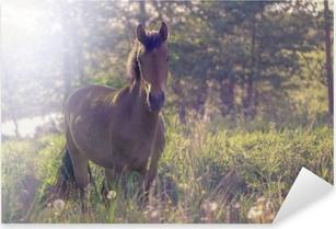 Pixerstick Aufkleber Braunes Pferd mitten in einer Wiese im Gras, die Strahlen der Sonne, getont.
