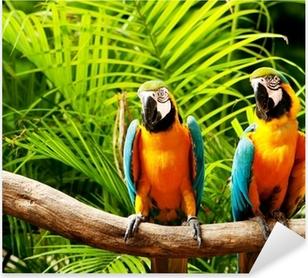 Pixerstick Aufkleber Bunte Papageien Vogel sitzt auf der Stange