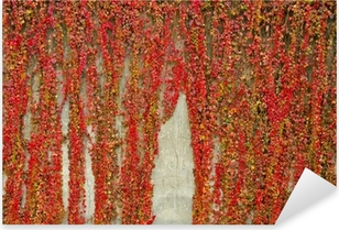 Pixerstick Aufkleber Bunte Schlingpflanzen bedeckt Wand aus Beton. Herbstfarben.