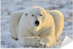 Pixerstick Aufkleber Eisbär liegend auf Tundra.p