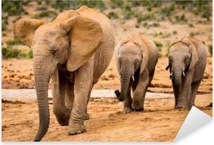 Pixerstick Aufkleber Elephants