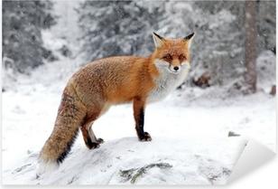 Pixerstick Aufkleber Fuchs im Wald in der Hohen Tatra, Slowakei