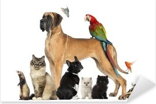 Pixerstick Aufkleber Group of pets - Hund, Katze, Vogel, Reptil, Kaninchenp