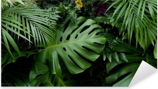 Pixerstick Aufkleber Grüne tropische Blätter monstera, Palmen, Farn und Zierpflanzen Hintergrund Hintergrund