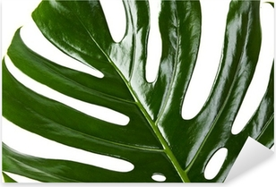 Pixerstick Aufkleber Grünes Blatt Monstera