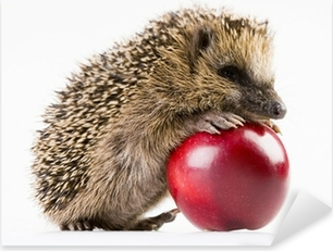 Pixerstick Aufkleber Happy hedgehogp