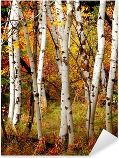 Pixerstick Aufkleber Herbst Birken