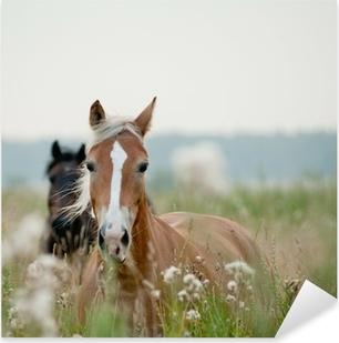Pixerstick Aufkleber Horses in Field