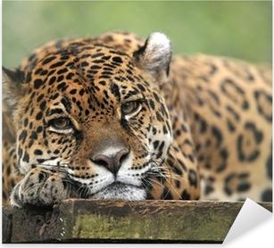 Pixerstick Aufkleber Jaguar in Gefangenschaft suchen feierliche, Costa Ricap