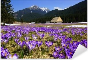 Pixerstick Aufkleber Krokusse in Chocholowska Tal, Tatra Gebirge, Polenp