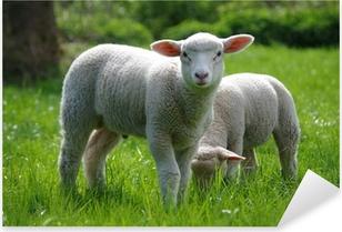 Pixerstick Aufkleber Lamm (Schaf) auf Weide
