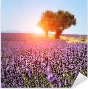 Pixerstick Aufkleber Lavendelfeld in der Provence, Frankreichp