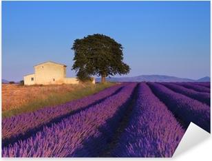 Pixerstick Aufkleber Lavendelfeld in der Provence