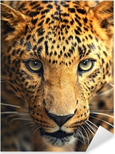 Pixerstick Aufkleber Leopard Portrait