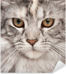 Pixerstick Aufkleber Maine Coon-close-up Porträt
