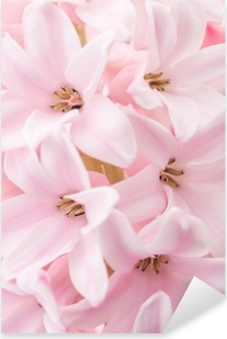 Pixerstick Aufkleber Pink hyacinth