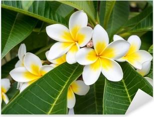 Pixerstick Aufkleber Plumeria Frangipani Blumen