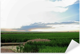 Pixerstick Aufkleber Reisfelder La Albufera Naturschutzgebiet in der Provinz Valencia Cullera