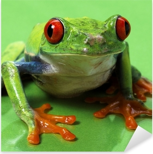 Pixerstick Aufkleber Rote Augen Laubfrosch Makro isoliert exotischen Frosch neugierig Tier brigp